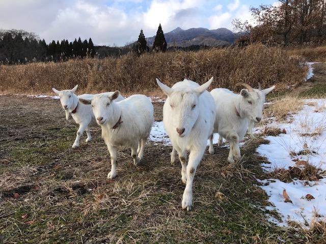 小泉農園 始動しております!