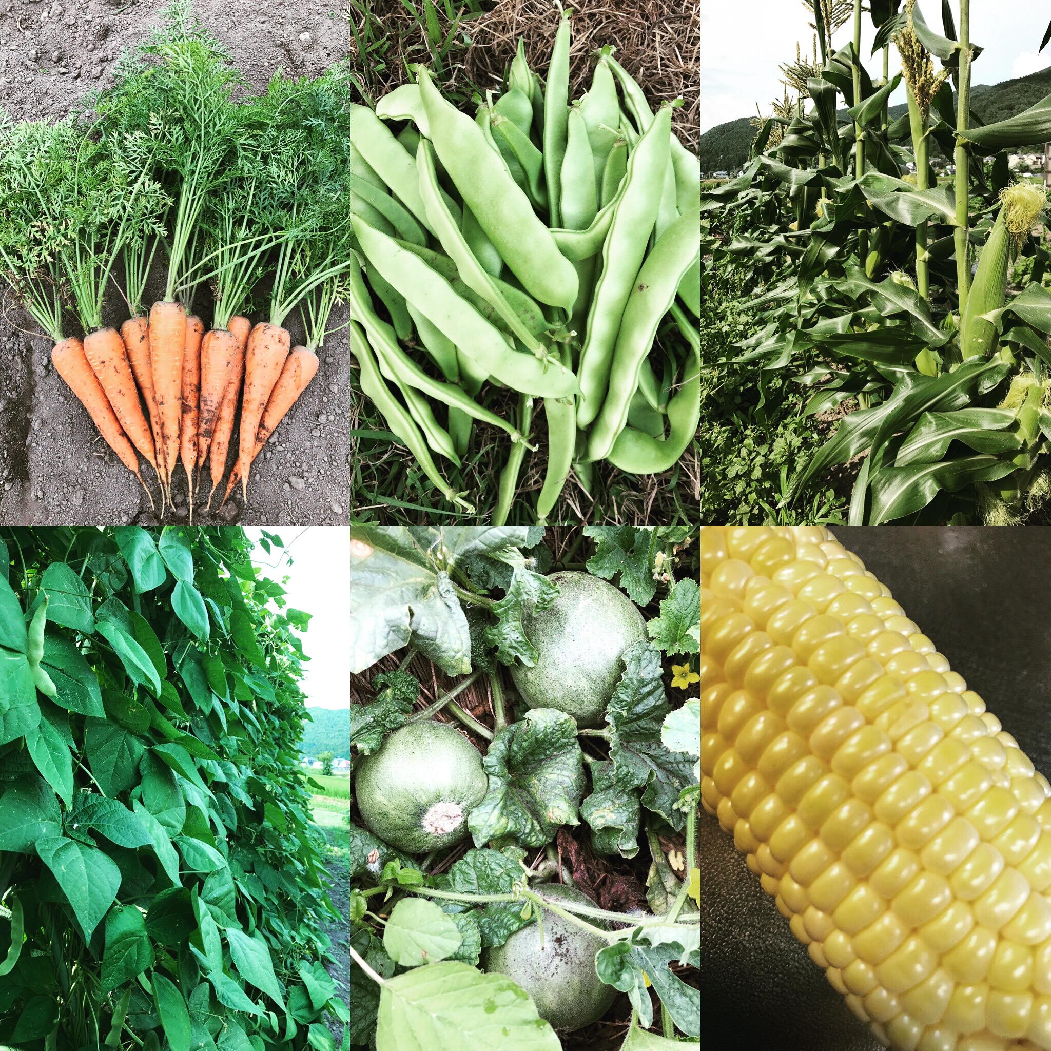 有機野菜定期便Web shopにてご購入いただけます!
