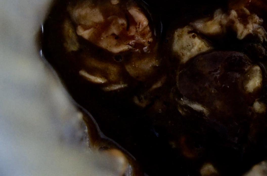 このバーニャカウダは植物の髄を叩いて食べる料理です