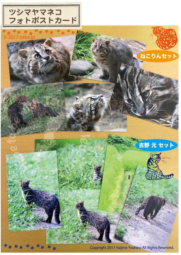 ツシマヤマネコのフォトポストカードを販売開始しました!