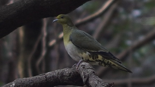 """wild bird""  with sante"