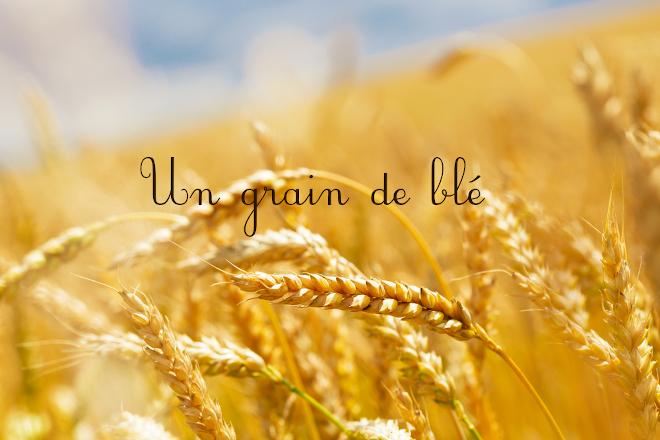 ショップスタッフ個人ブログ【一粒の麦~un grain de blé】のご紹介★