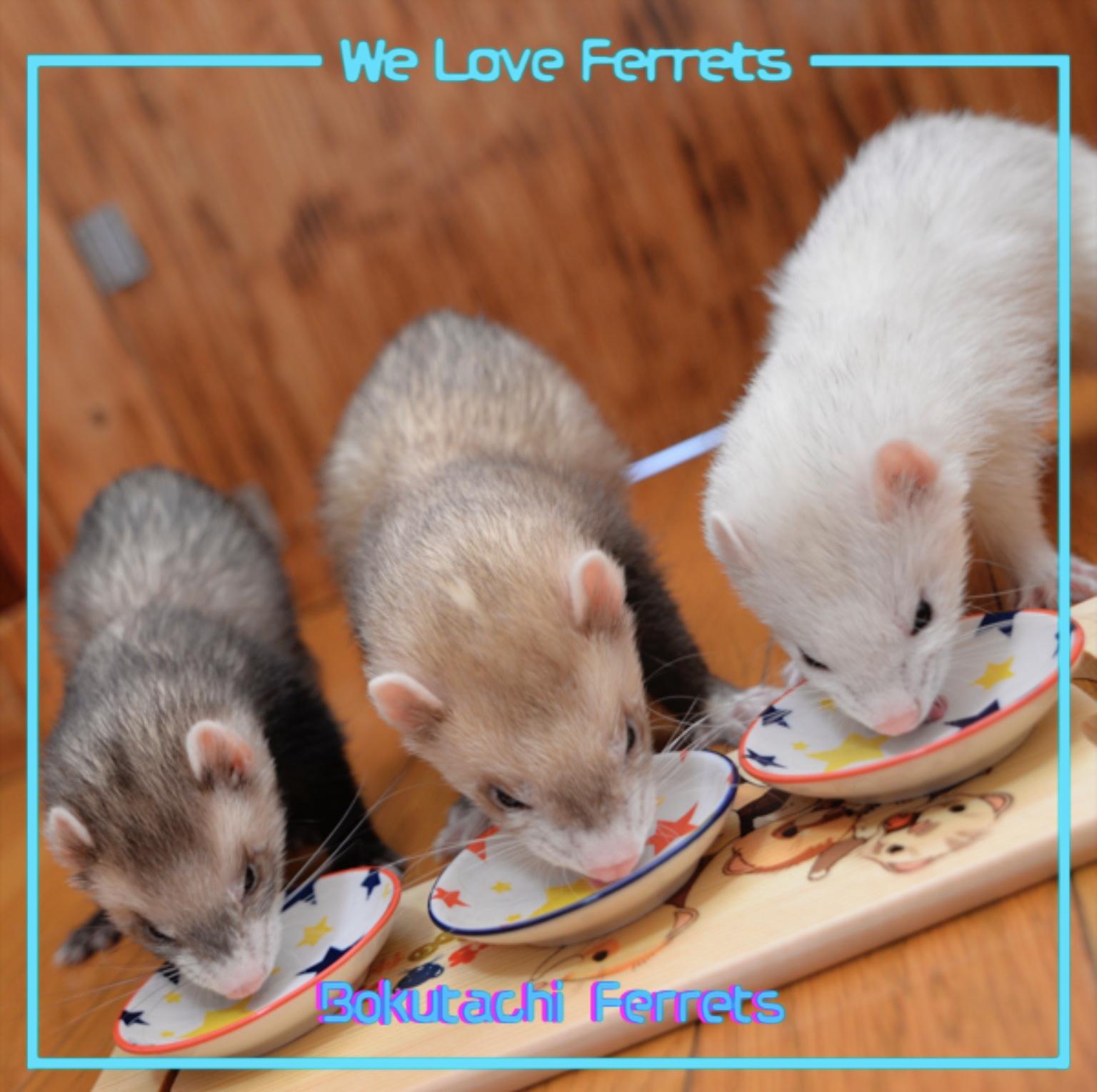 僕たちフェレット可愛い仲間ホームページお知らせを更新しました。