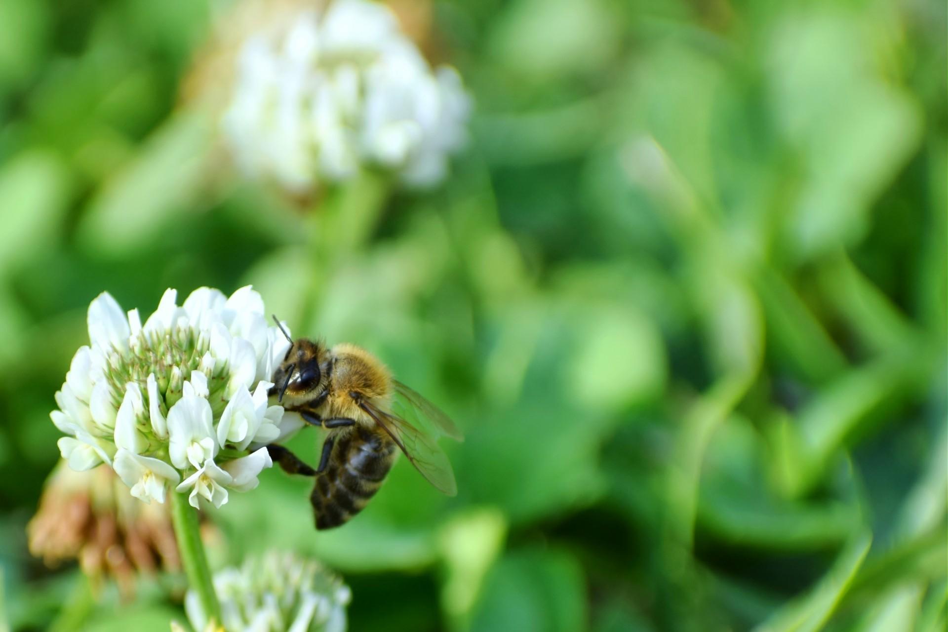 「日本蜜蜂ミツロウクリーム」徹底解説!