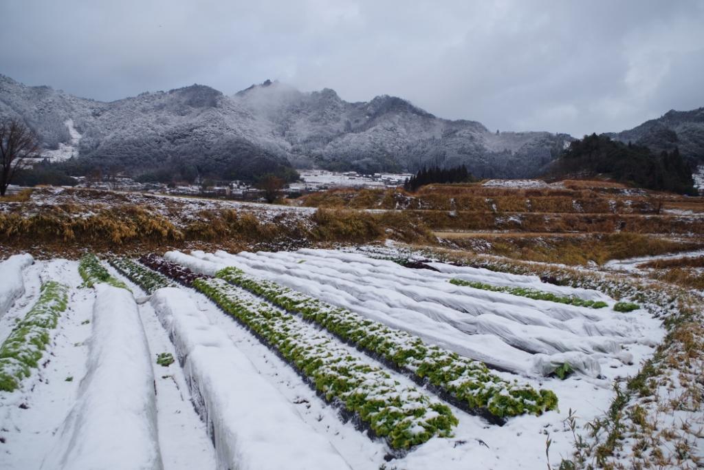 慣行栽培でも自然栽培でもなく「有機栽培」で無農薬野菜を育てる理由