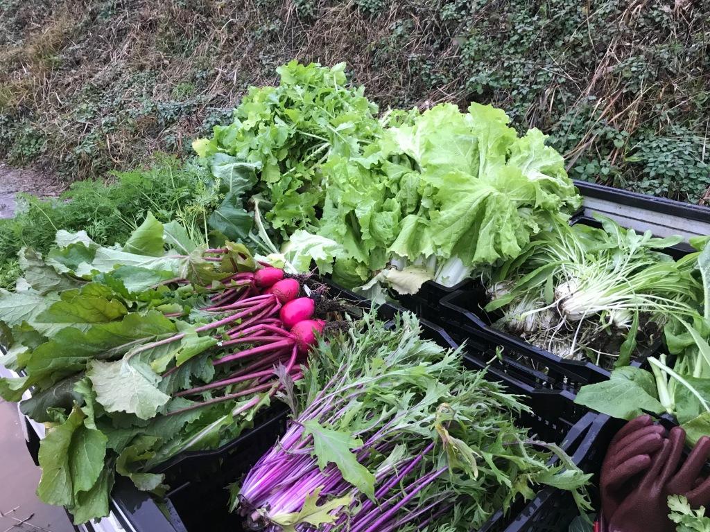 まずは栽培理論を語れる有機農家か?野菜セットの通販で宅配する前に