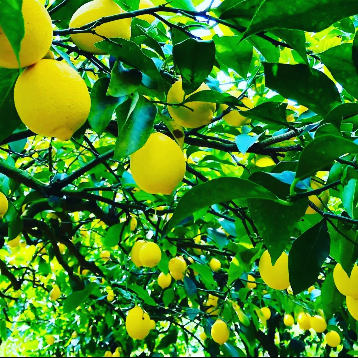 ん・・・レモン?