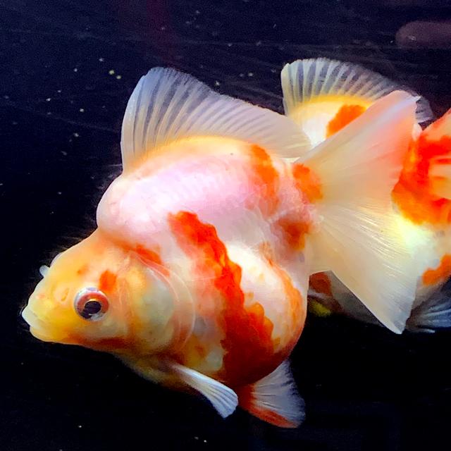 色々金魚アップ⤴️しました!