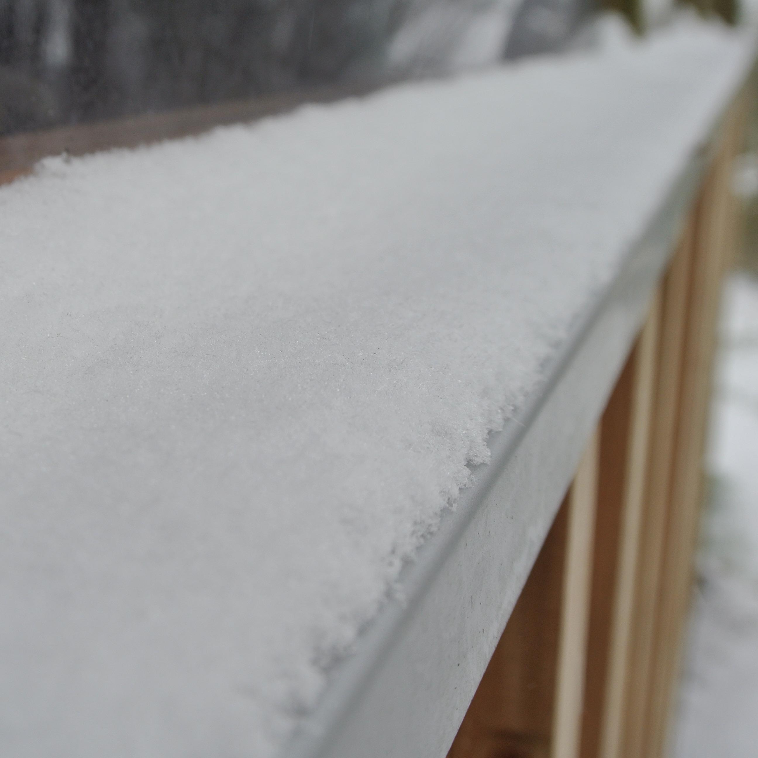 【スタッフコラム】  雪の庭を犬は駆け回るのか
