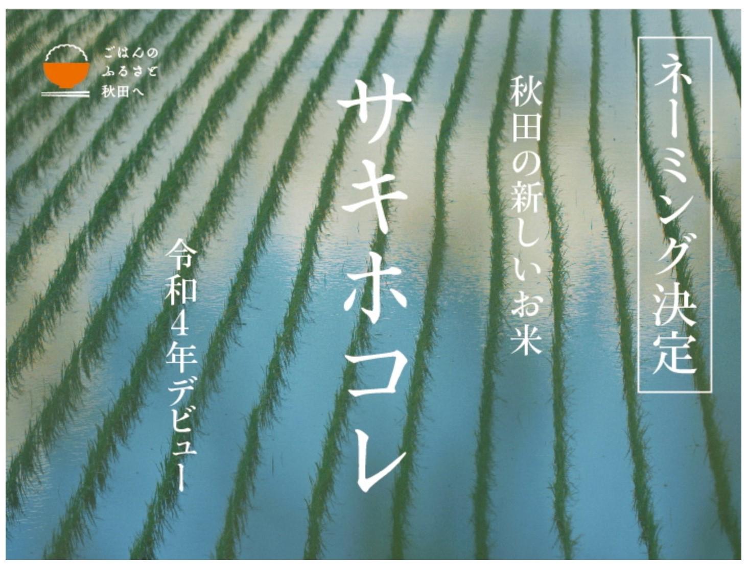 秋田県の新ブランド米「サキホコレ」!!
