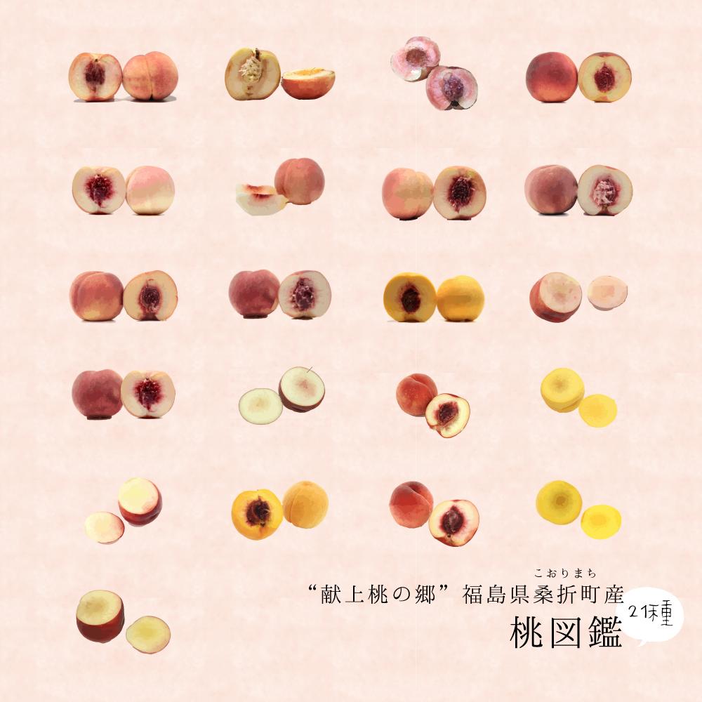 """あなたの""""推し桃""""は?献上桃の郷福島県桑折町産の桃は21種類①"""