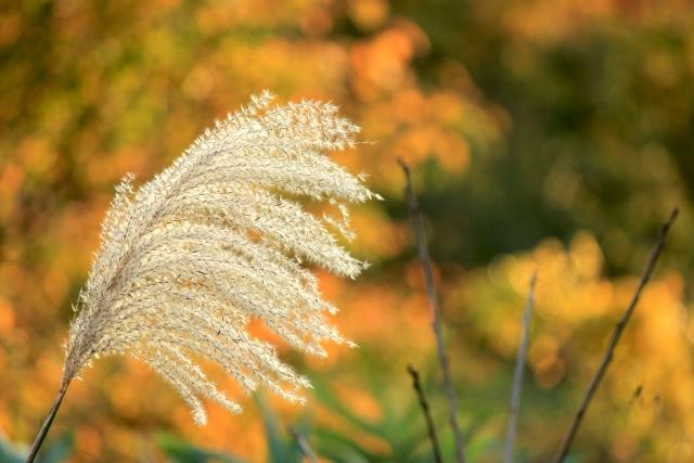 【ブログ】福島県桑折町の秋|紅葉と旬の味覚