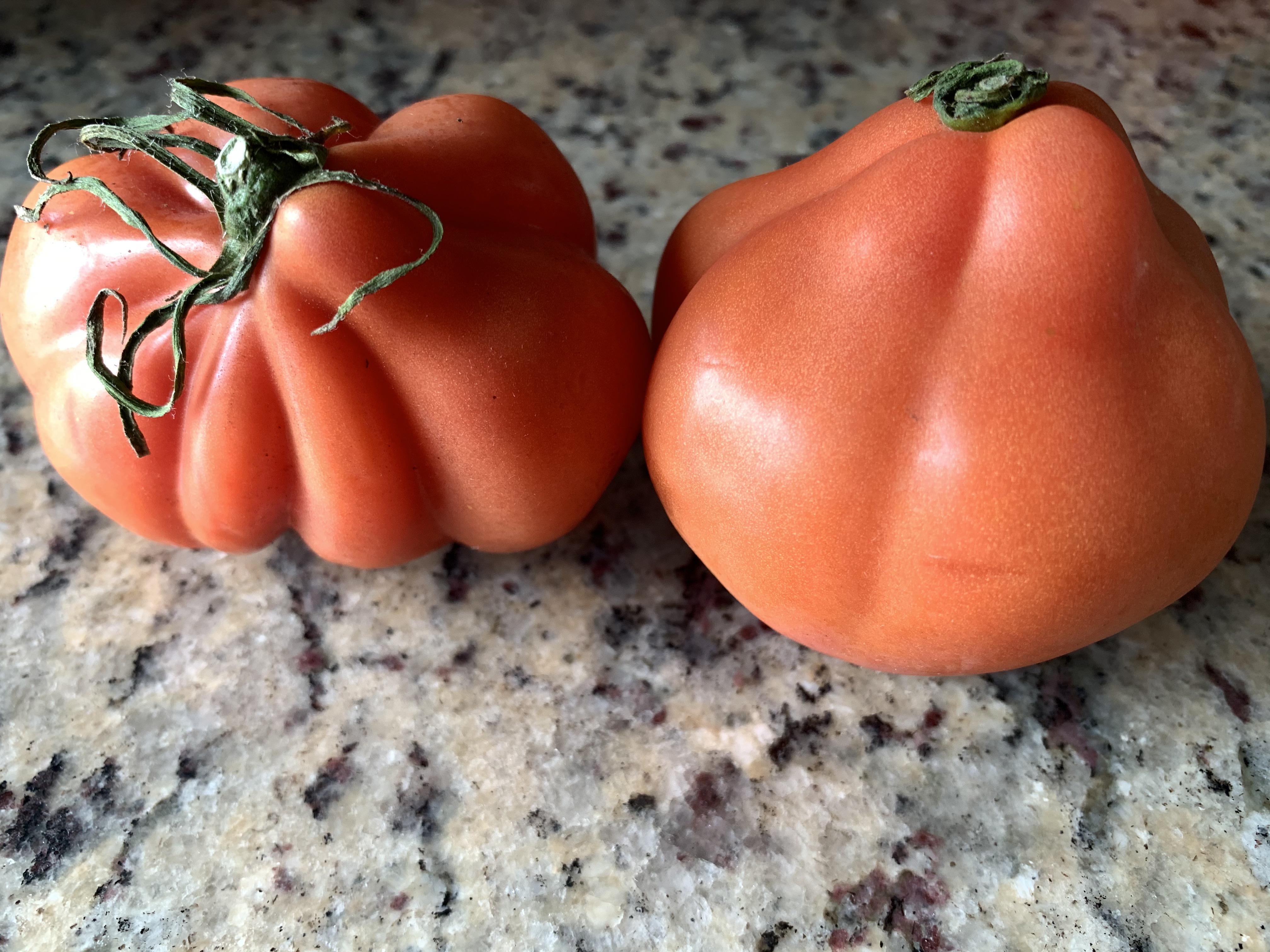 中村さんのフルーツトマトと料理用トマト「牛の心臓」が新登場!