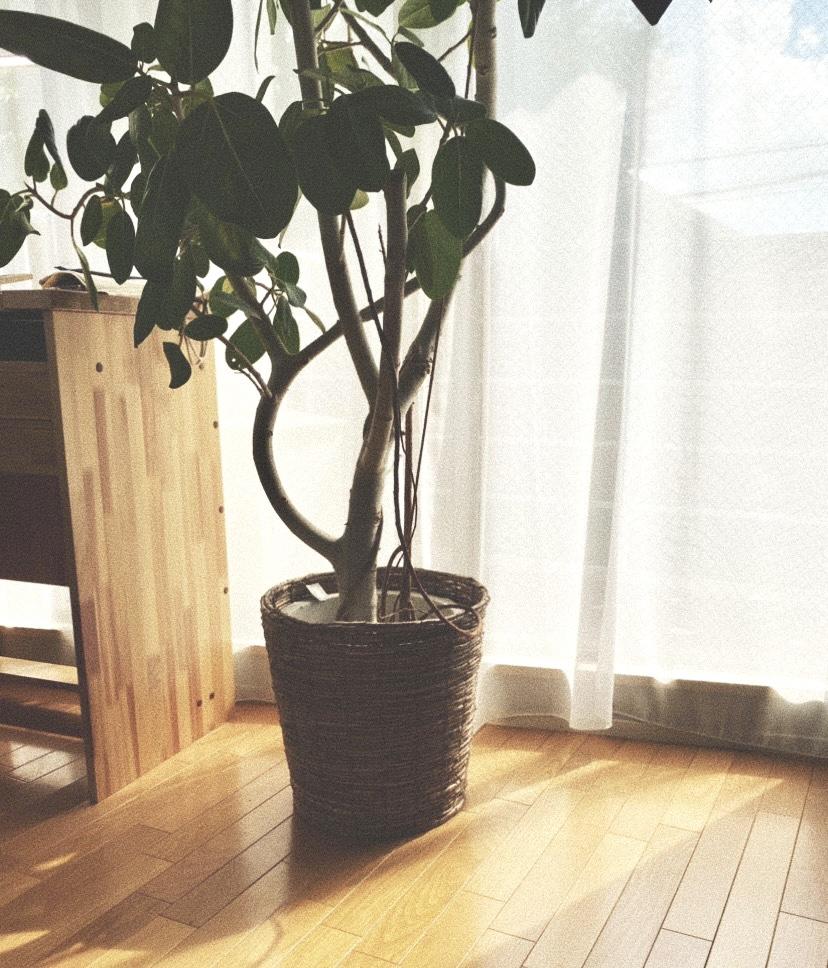 綴る、ふたりの想い 〈YUKA HOJO atelier Instagram〉