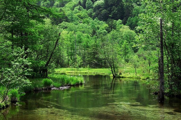 森林農法(アグロフォレストリー)