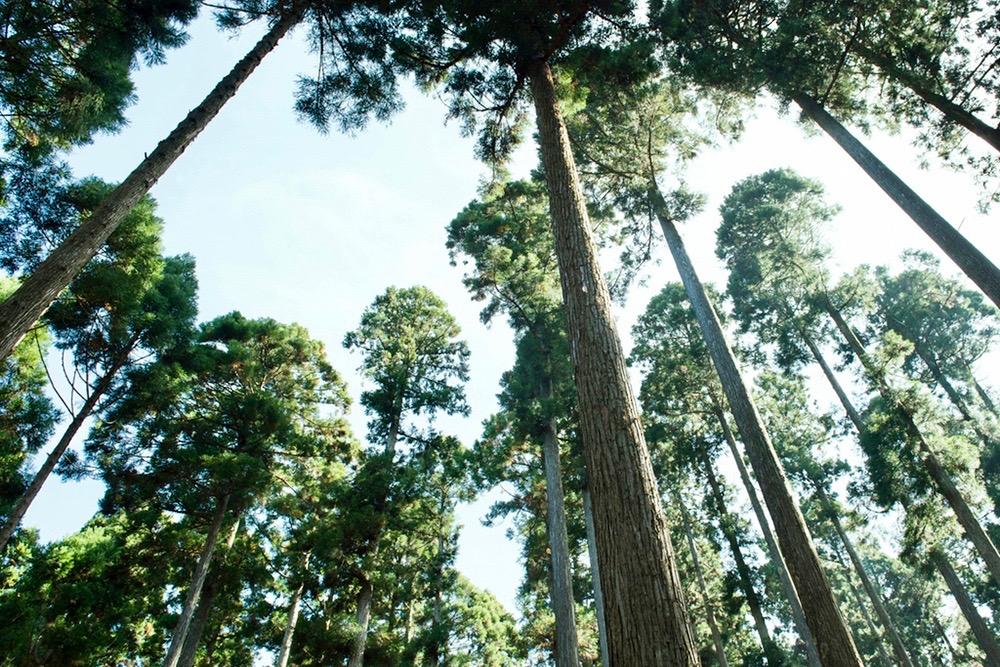 自然環境と間伐材