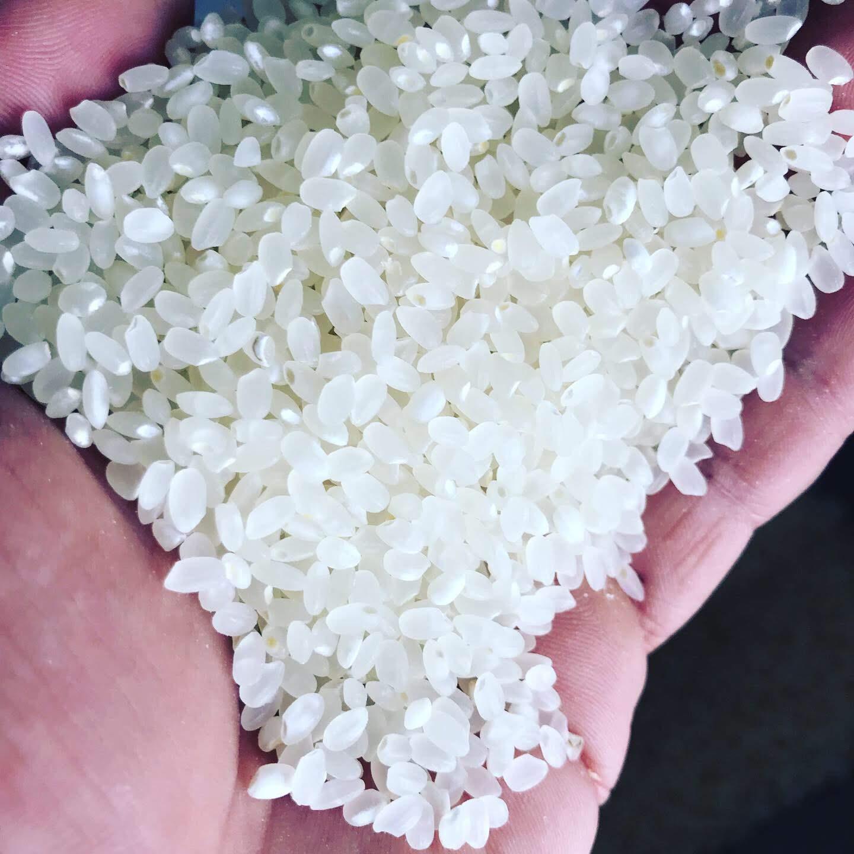 精米方法、洗米(炊き方)や保存方法でお米って味が変わるの?