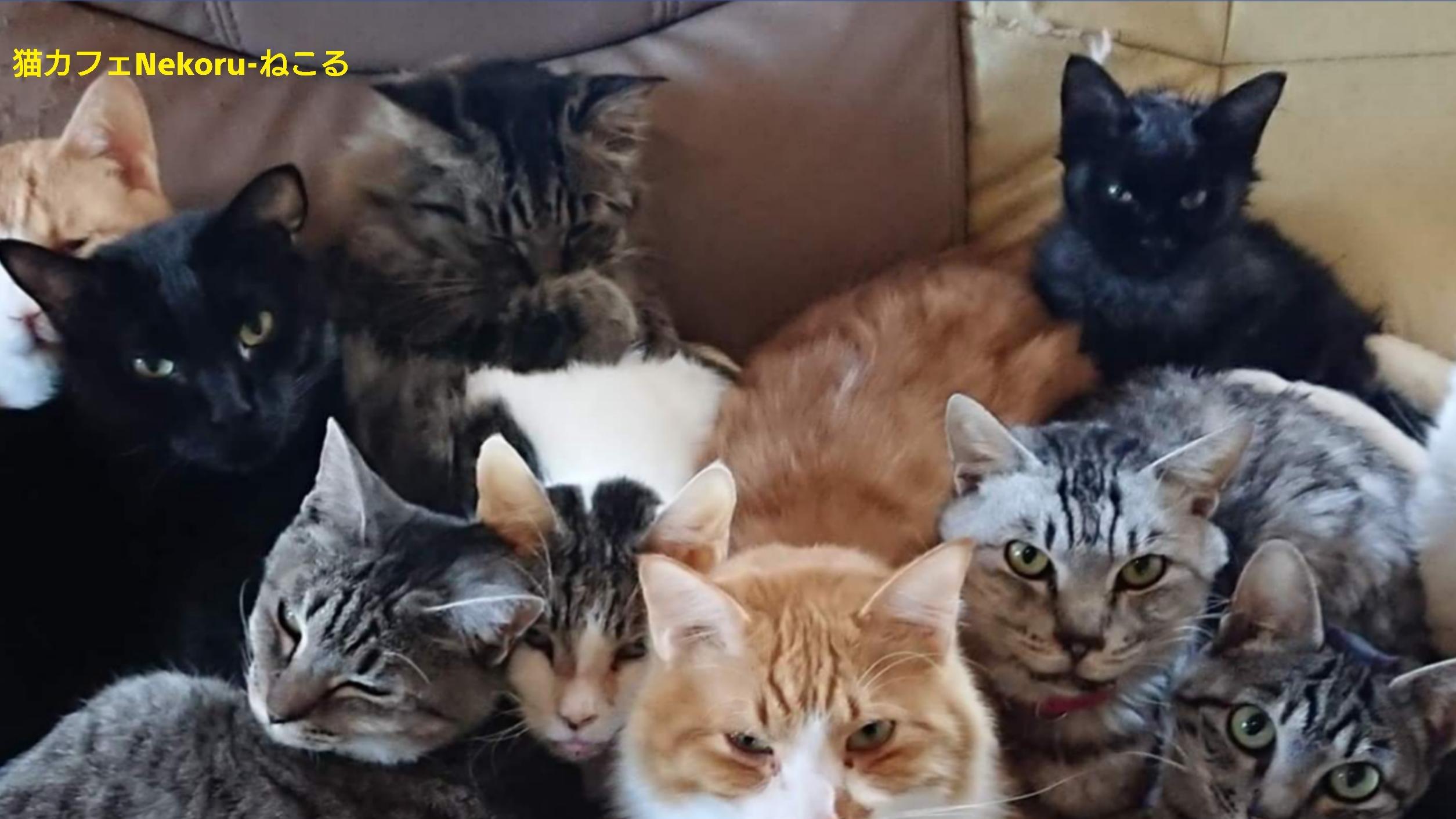 猫カフェNekoru-ねこるの猫ちゃんたちにLaKarenの食器を使って頂きました。