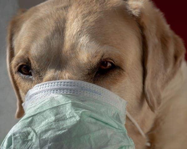 うちのペットは大丈夫?犬や猫のコロナ感染
