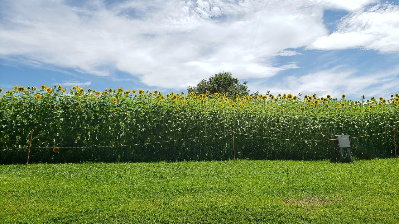 緑地公園養蜂場 7月の景色