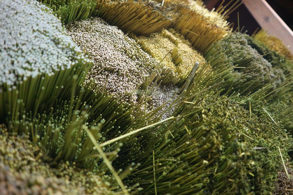 【畳や花ござの原料】国産い草・中国産い草の違いとは?メリット・デメリットも解説