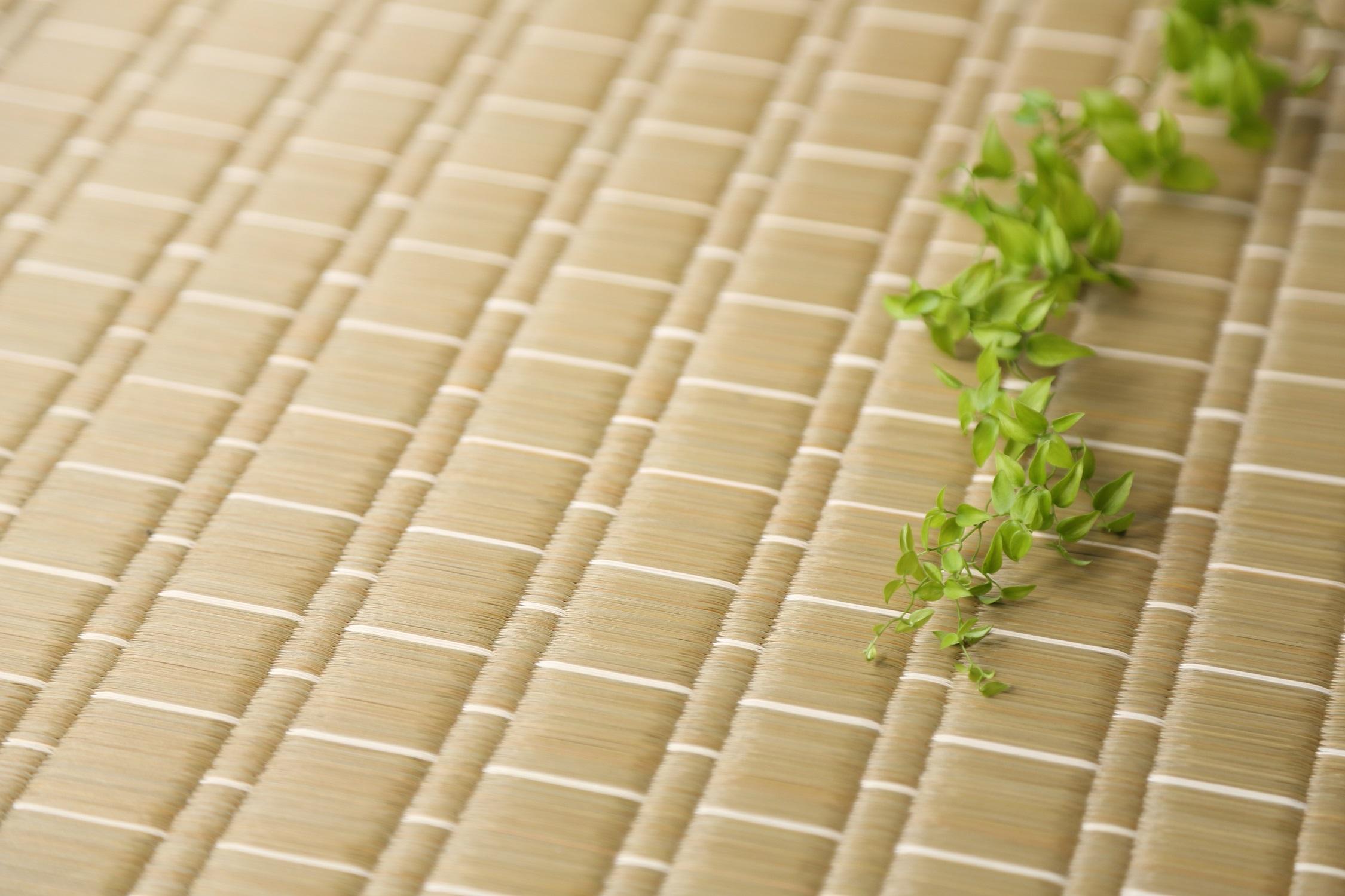 【畳や花ござの原材料】国産い草ができるまで