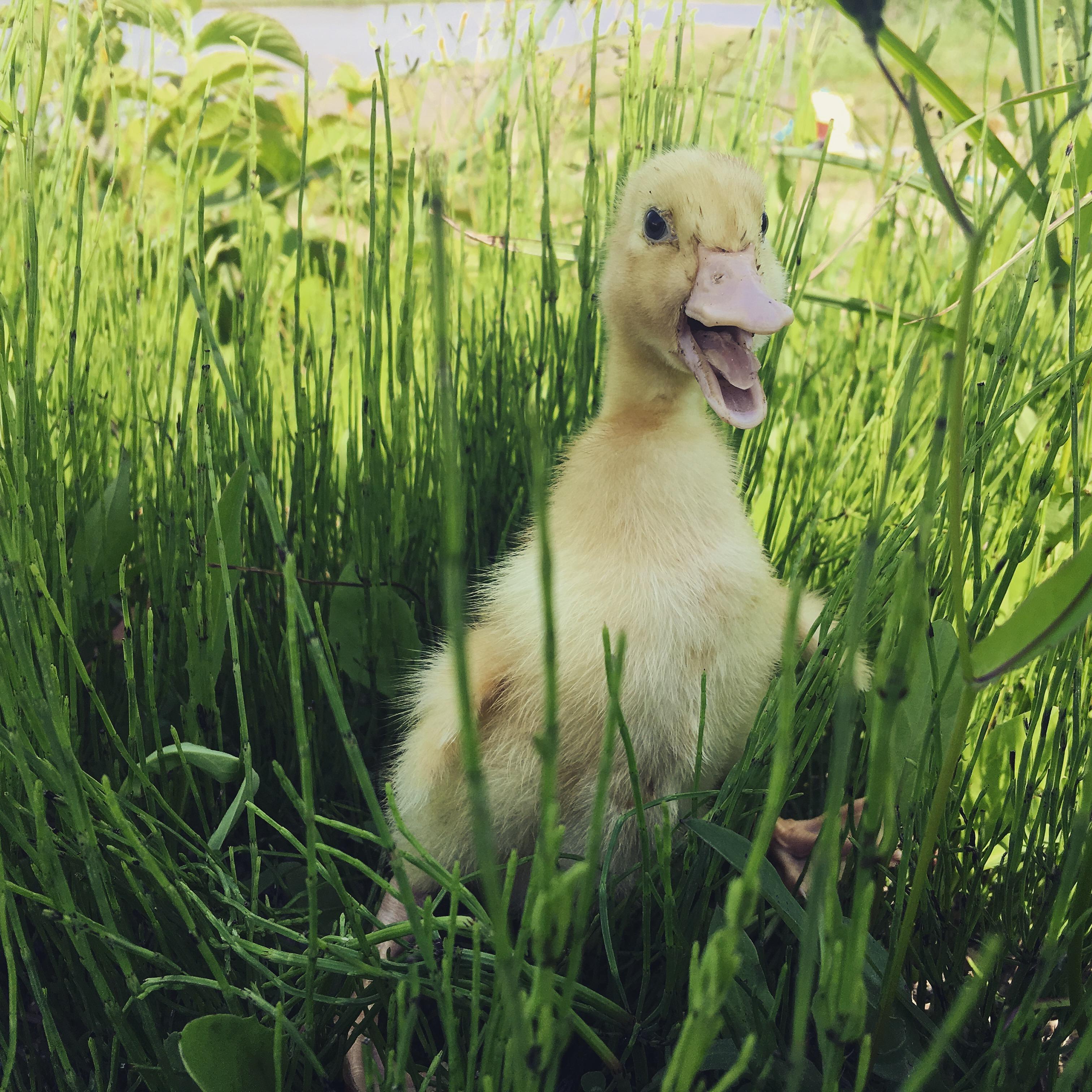 草が好きw