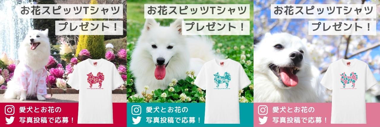 お花スピッツTシャツのプレゼントキャンペーンを実施します。