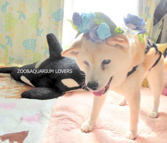 canaan-chigasaki  Zoo&Aquarium Lovers