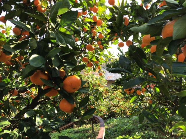 きとみず果樹園