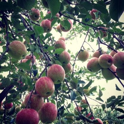 佐々木りんご園