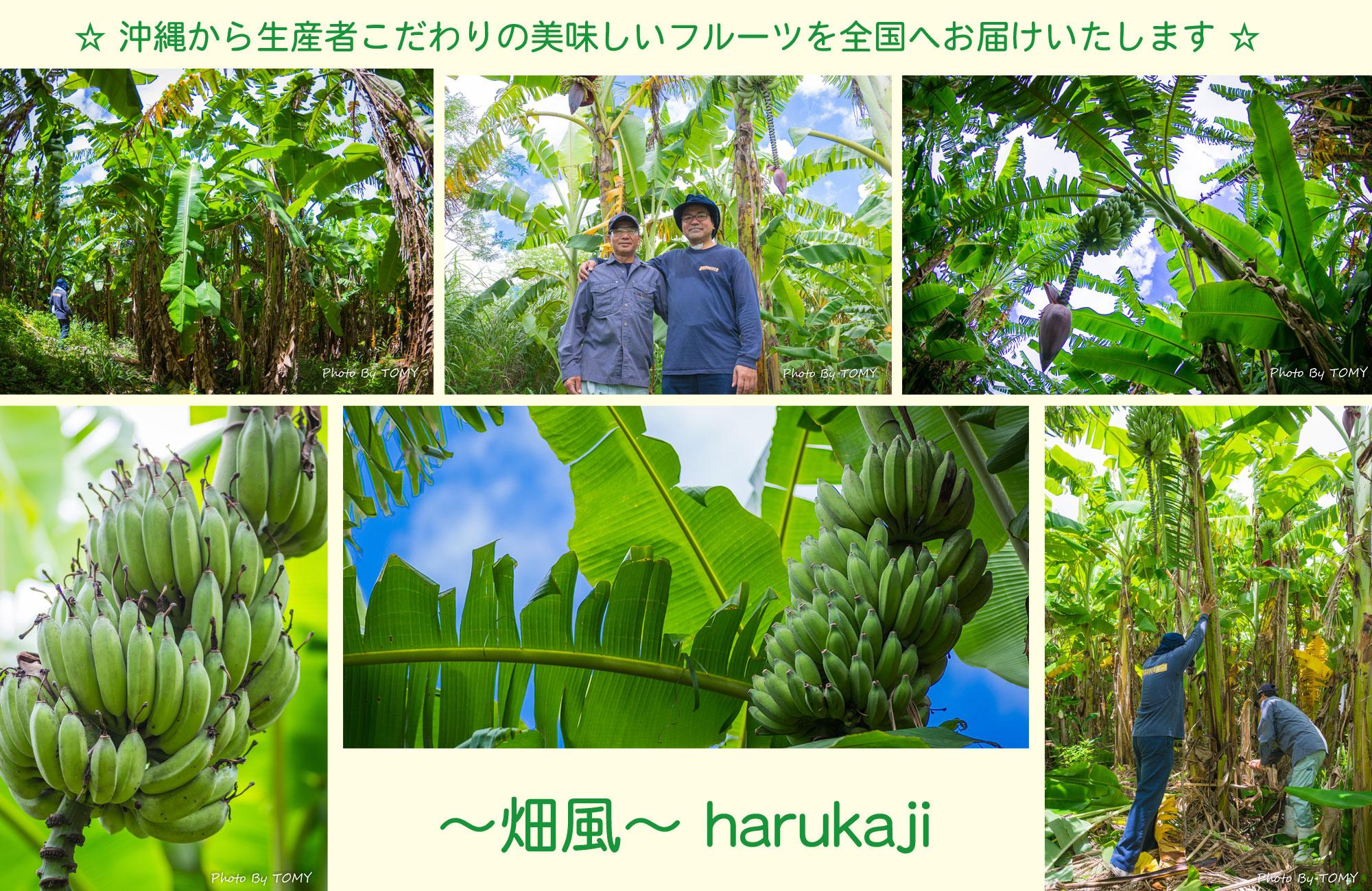 ~畑風~ harukaji