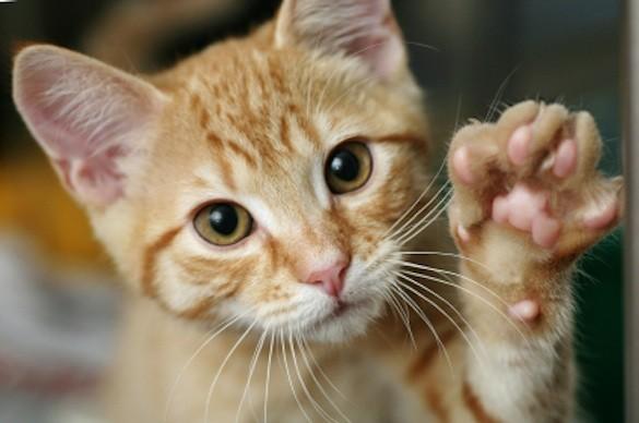 総合雑貨屋招き猫
