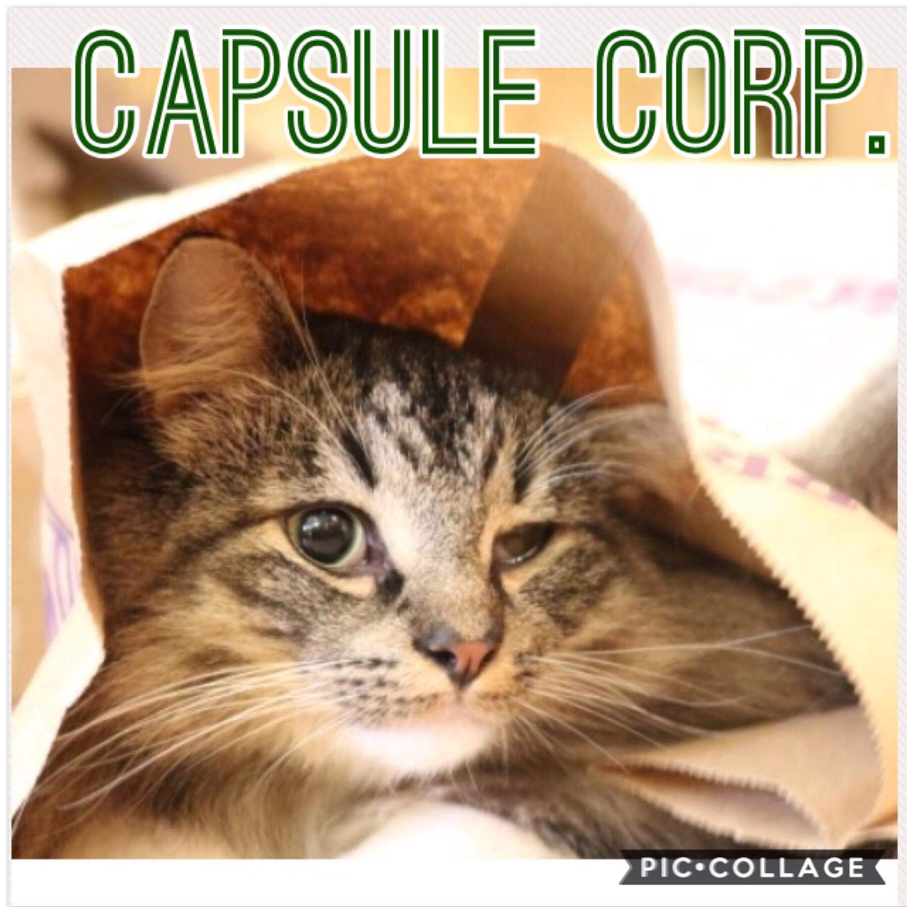 capsule01