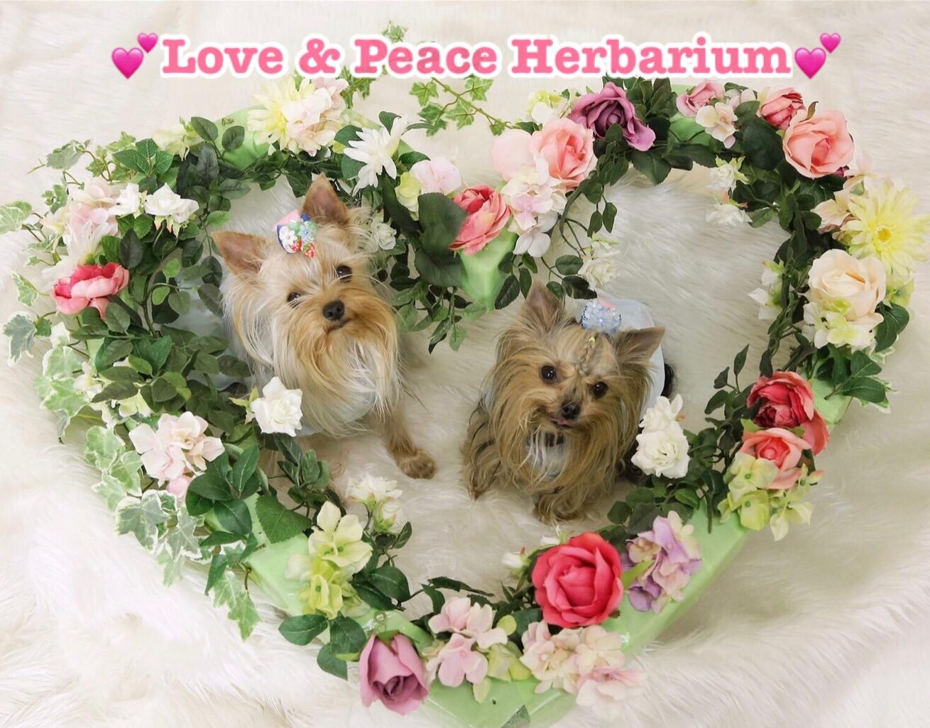 love.and.peace.herbarium〜らぶ&ぴいすハーバリウム〜