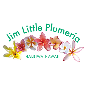 Jim Little Plumeria JAPAN