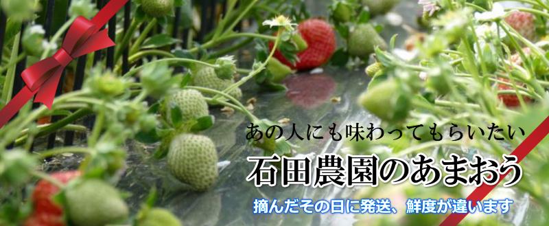 石田農園あまおう通販SHOP