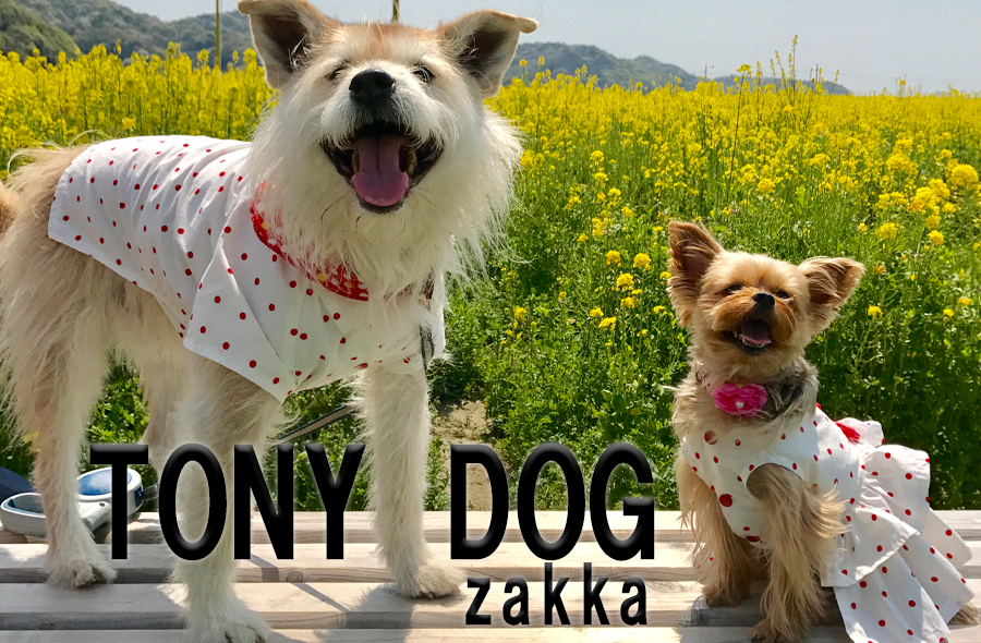 TONY DOG zakka ハンドメイド犬服と雑貨のお店