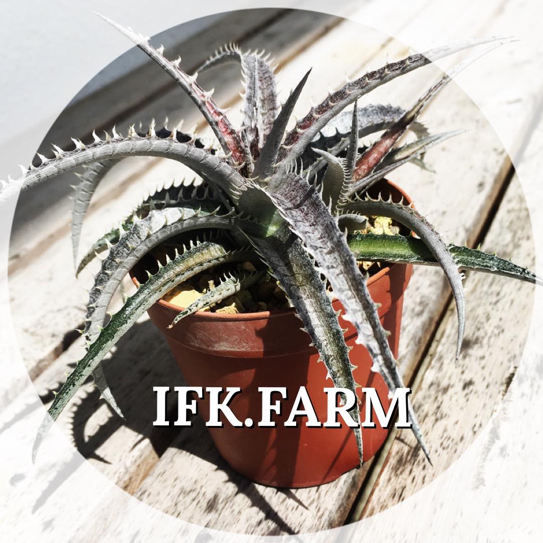 ifk.farm