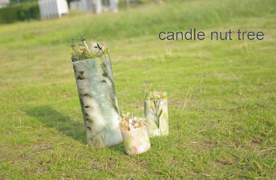 candle nut tree