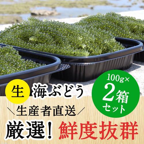 【100g×2個セット】沖縄 南城市産 朝採れ生海ぶどうA級品
