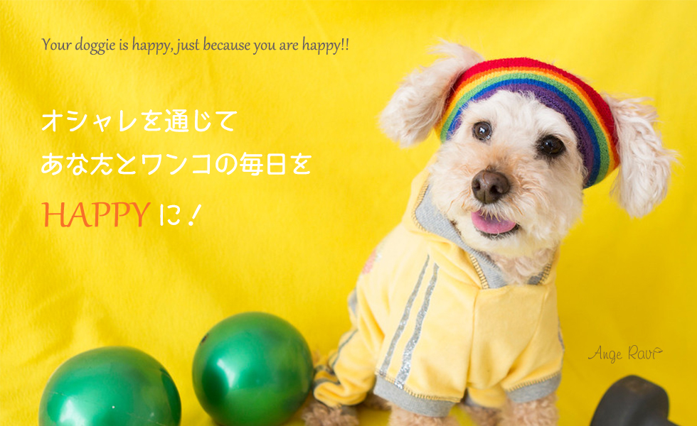 Lovely Dogwear Angeravi (アンジェラビ)紹介画像1