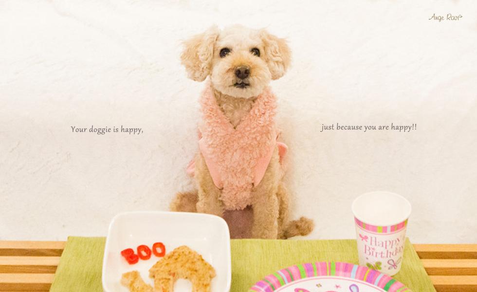 Lovely Dogwear Angeravi (アンジェラビ)紹介画像2