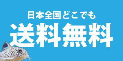日本全国どこでも送料無料