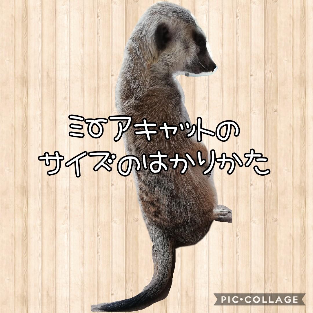 Cute  Treasure紹介画像2