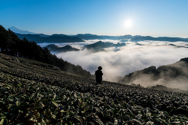 H27年皇室献上茶指定茶園「天空の茶畑」豊好園がおくる!シングル手摘みかぶせ茶「燦キララ」