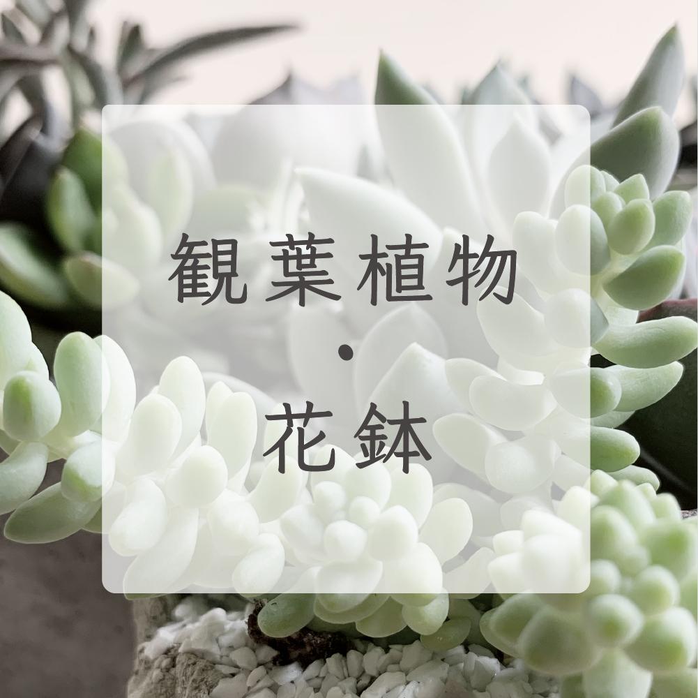 観葉植物・鉢物