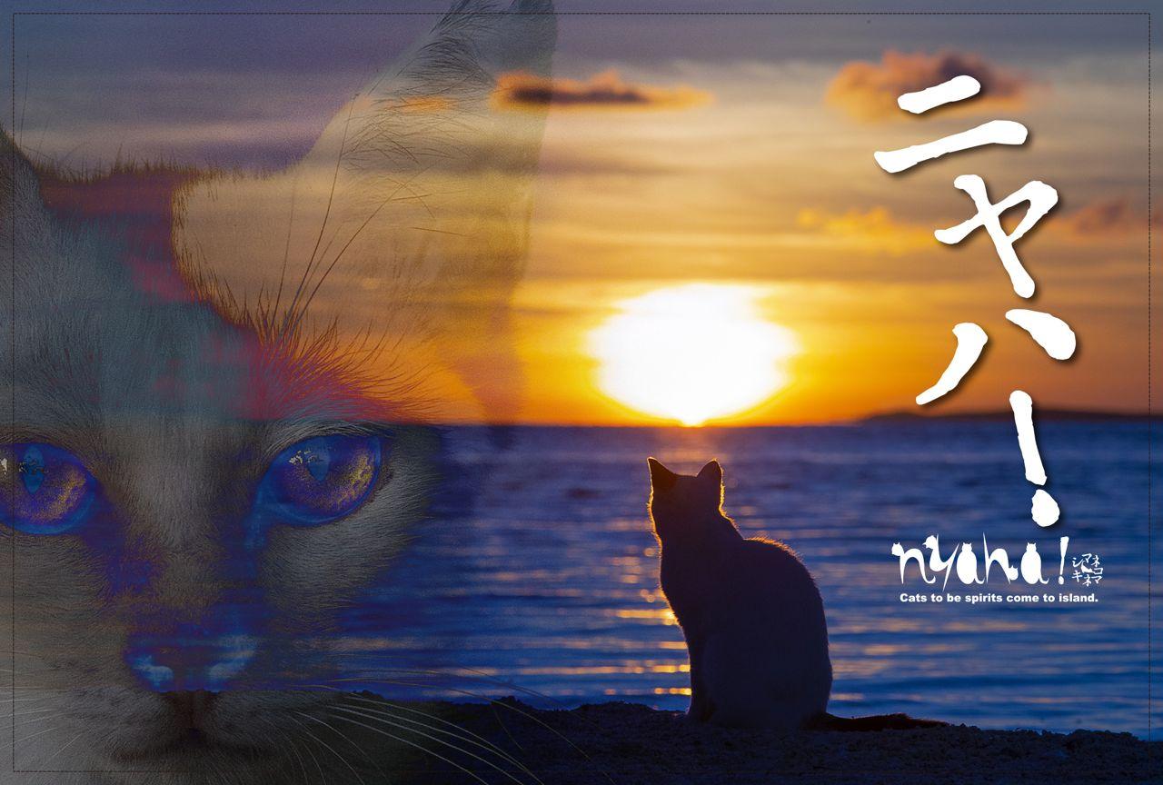 島猫映画「Nyaha!」DVD