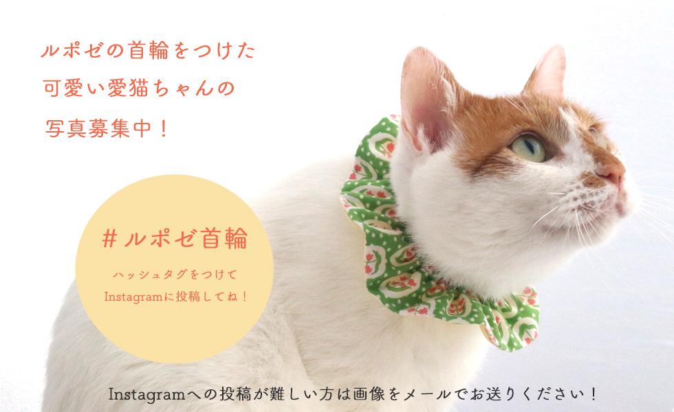 猫と猫好きのためのお店 Reposer ルポゼ紹介画像1
