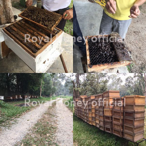 養蜂農家視察